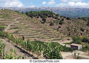 Organic vineyard in Priorat, Spain - Organic vineyard in the...