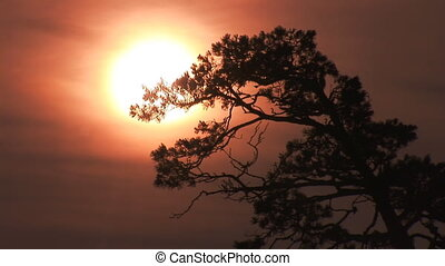 Pine meets Dawn