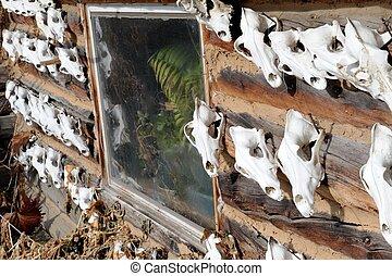 Hunting trophies or skulls, Alaska - Hunting trophies or...