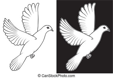 White Dove - A white dove on white and black background.