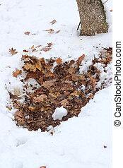 roe deer bedding ( capreolus capreolus ) in winter in the...