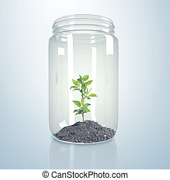 Green sprout inside glass jar - Green sprout and soil inside...