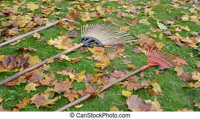 leaf raker worker take - worker woman pick three leaf rake...