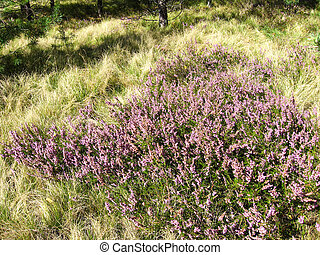 pink plants in the forest