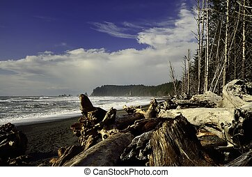Pacific northwest coastal beach with driftwood