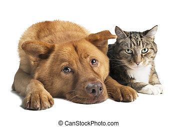 Dog and Cat together wide angle - Dog and cat together on...