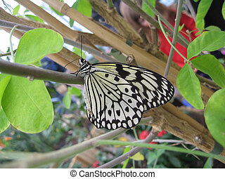 paper kite butterfly - on branch