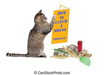 How to catch a mouse - Cat is looking at instructions on...
