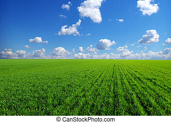 field on  blue sky