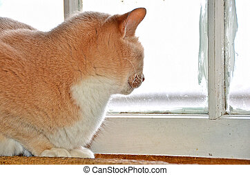 tabby cat looking out of window