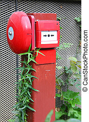Nature vs man-made - Vine growing on man-made fire alarm...