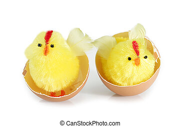 Two friends - Just hutched yellow chicken, and eggshell
