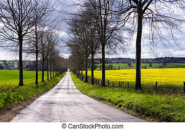 Avenue through Rapeseed Fields - A tree lined avenue through...