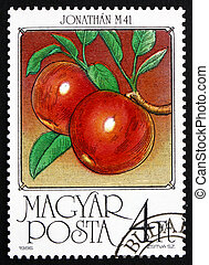 Postage stamp Hungary 1986 Apples, Malus Domestica - HUNGARY...