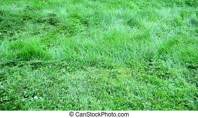 barefoot woman grass cut