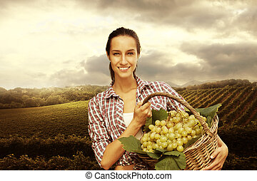 vintner picking grapes in a vineyard - Smiling woman with...