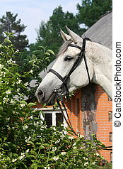 Beautiful white horse portrait in flowers in summer