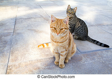 cats - two cats sitting on a stone terrace