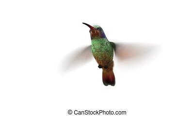 rotating humming bird, seamless looping 3d animation,...