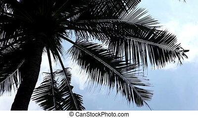one palm tree with big beautiful leaves in bottom view