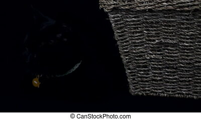 Black cat resting beside a basket, on black background