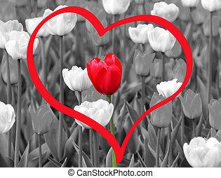 red tulip - red spring tulip