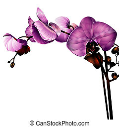 orchid flower label with space for your message