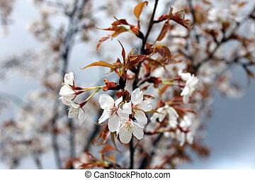 Flowering tree - Gorgeous flowering tree welcomes the season...