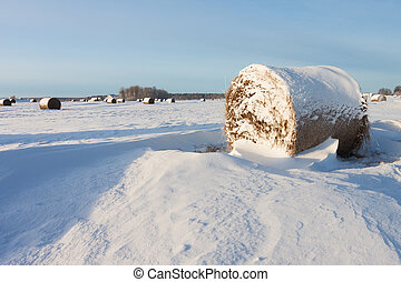 Bales of hay laying in snow on field - Bales of hay laying...
