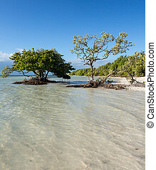 Florida Keys Anne's Beach - Anne's Beach by roadside in...