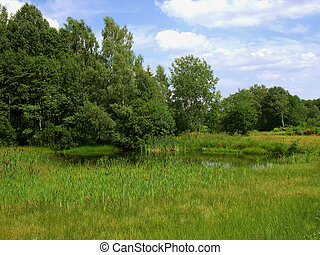pond with cattails Plothen - Idyllic meadow with a pond and...