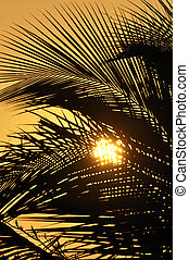 Orange sunset through palms - Telephoto of beautiful...
