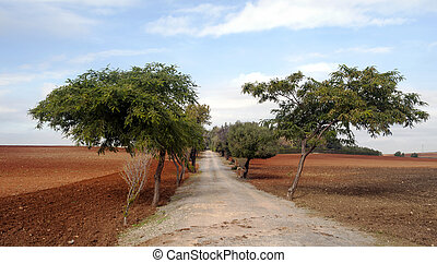 Road amidst trees, all surrounded by land