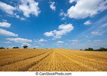Arable Landscape