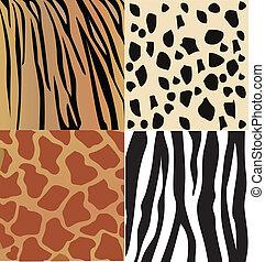 Set of wild animals skin vector - Set of giraffe, cheetah,...