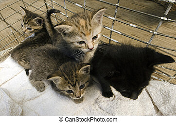 Little kittens - cute little kittens in a cage.