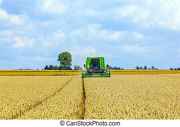 harvester in corn fields - green harvester in corn fields