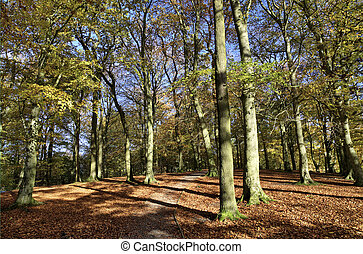 Autumn trees in Talkin Tarn Country Park - Trees in Talkin...