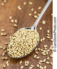 wheat berries - a spoonful of healthy wheat berries