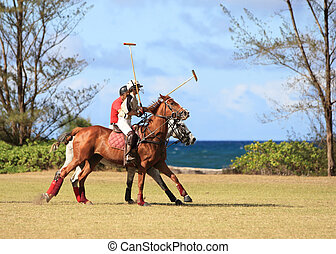 Polo players riding to game  - Hawaii polo field near beach