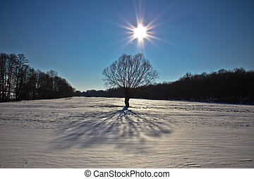 Snow landscape tree under sun on snowy terrain