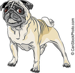 vector sketch angry dog pug breed - color sketch angry dog...