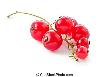 Red Currents Ribes rubrum - Single cluster of red currents...