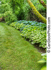 Landscaped garden scene with hosta plants