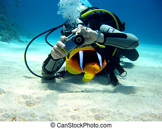 diver photographer with anemon fish