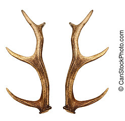 Two deer horns isolated on white