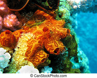 coral reef with sponge