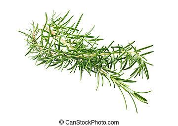 Rosmarinus officinalis - Rosemary sprig  isolated on white