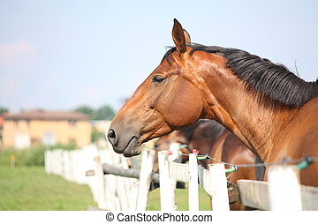 Brown horse standing near the fence