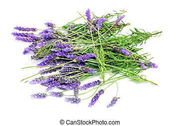 lavender - a pile of lavender flowers on a white background